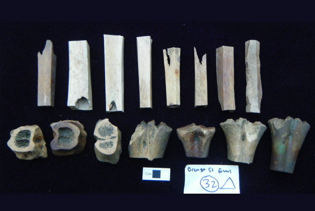 Fragments of bone-working waste. Image: Colchester Archaeological Trust