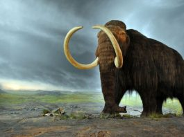 """Woolly mammoth"" by Flying Puffin - MammutUploaded by FunkMonk. Licensed under CC BY-SA 2.0 via Wikimedia Commons"