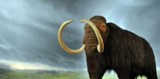 """""""Woolly mammoth"""" by Flying Puffin - MammutUploaded by FunkMonk. Licensed under CC BY-SA 2.0 via Wikimedia Commons"""