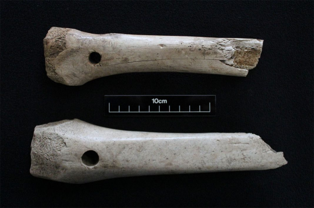 Probable bone sled runners. Image: Archaeological Solutions