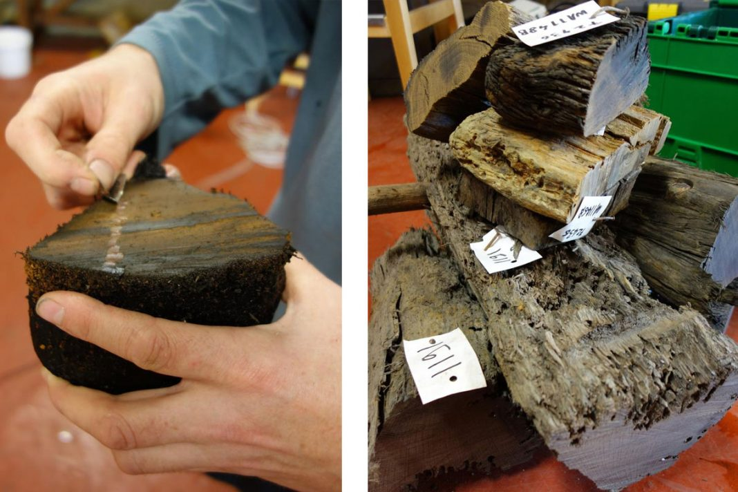 Dr Roderick Bale revealing tree rings and Timbers ready for transport for further testing. Images: Wessex Archaeology