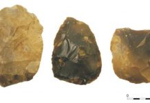 Handaxes recovered from the southern North Sea. Image: Wessex Archaeoogy
