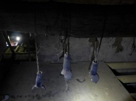 Staff from Heritage Lincolnshire made a strange discovery in the roof of the Old King's Head.