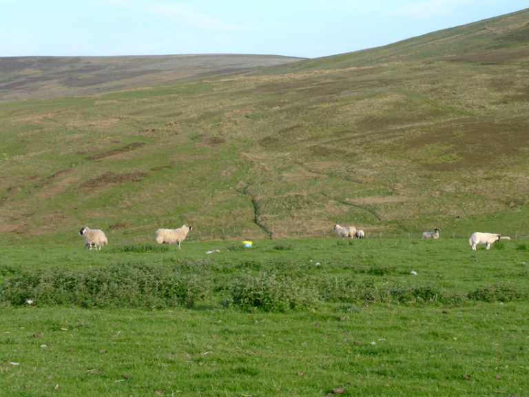 The Lam(b)mermuir Hills? Exploring the history of sheep farming in southern Scotland from the comfort of the UK coronavirus lockdown